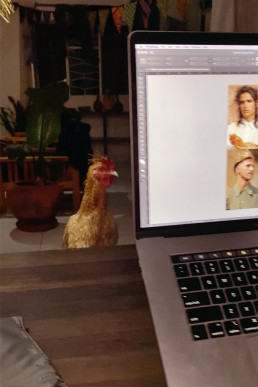 Rooster looking at laptop